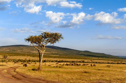 Five reasons hydrogen has to happen in Africa… and five clear signs that it is