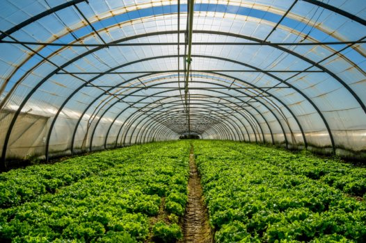 Protium and CambridgeHOK to accelerate green hydrogen use in the horticulture sector