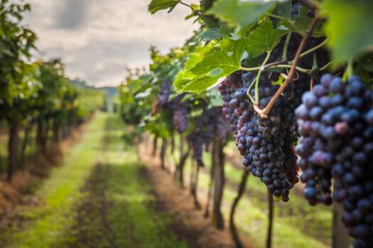 LAVO to provide hydrogen storage to Duxton Vineyards